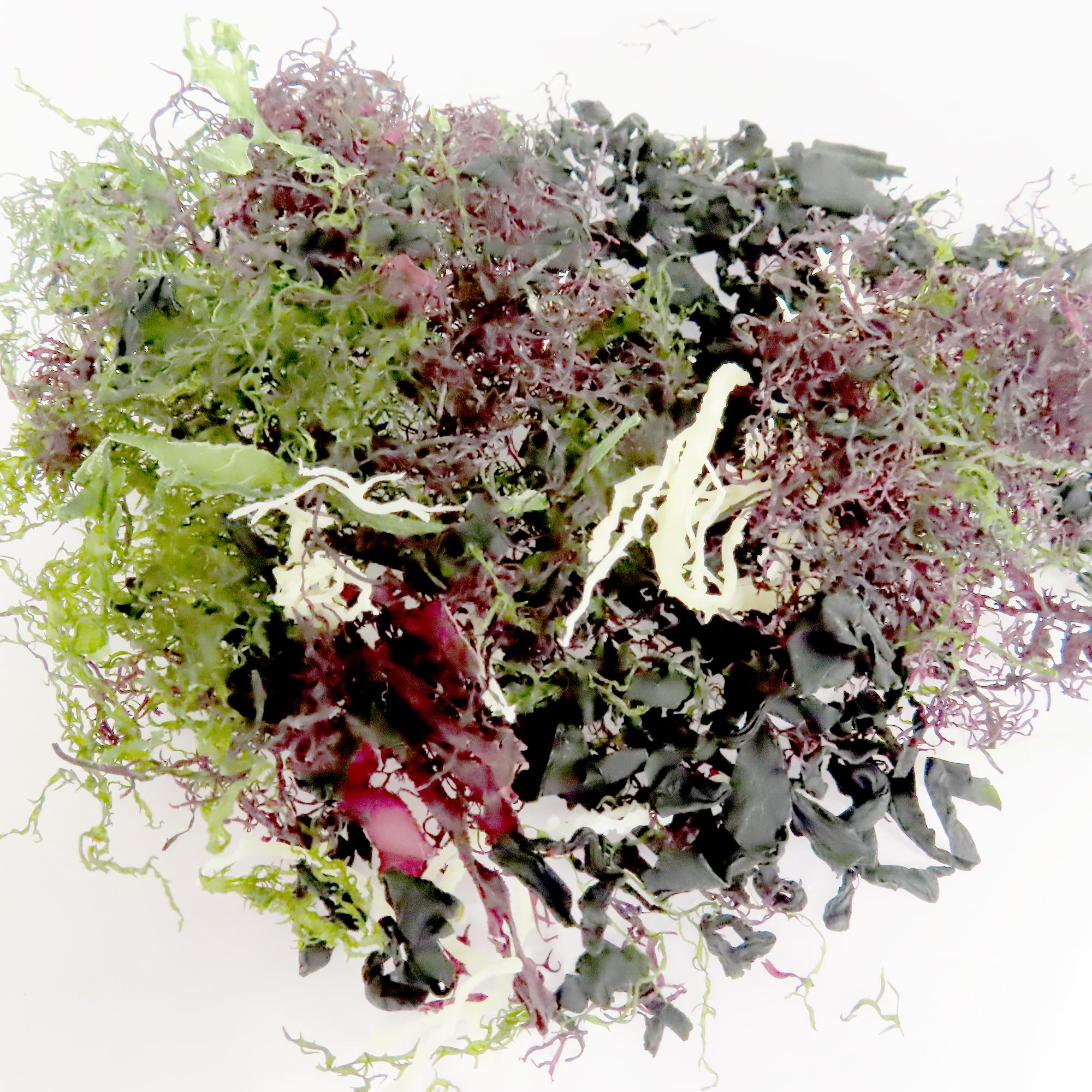 Image Nihon Shokken Mix Seaweed 日本食研海澡 25grams